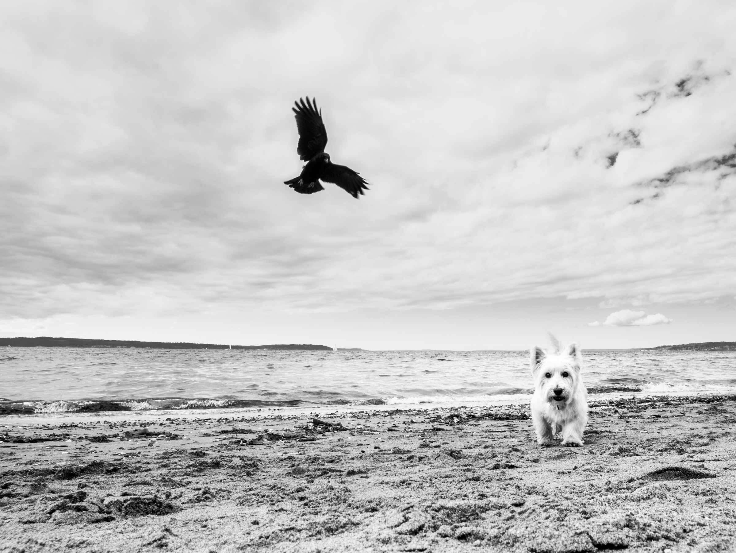 Dog-Crow-Beach